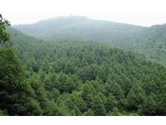 贺州、桂林代编使用林地可行性研究报告的公司