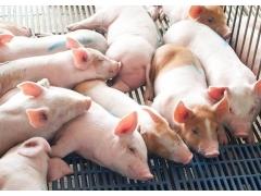 养猪场需要办理水土保持方案吗_广西水土保持方案编制单位